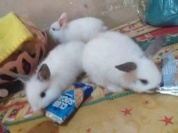 Lindos filhotes de coelhos com trinta dias