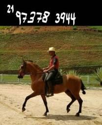 Cavalo Campolina Marchador - Inteiro