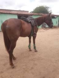 Égua pronta de Esteira vendo ou TROCO