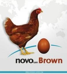 Novogen Brow