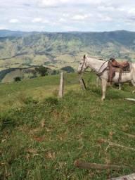 Título do anúncio: Sitio Maravilhoso e Rico em Água! Bairro Freires, Piranguçu/MG
