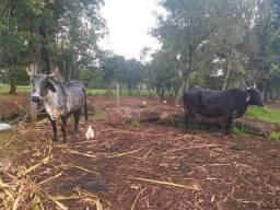 Junta de vaca
