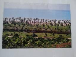 Fazenda de Coqueiros 596 hectares - Linha Verde - Conde - Bahia