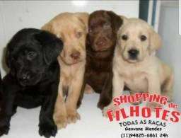 Labrador Chocolate/Preto/Amarelo - todos com Pedigree e assistencia veterianaria gratuita