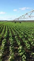 Fazenda com 2 pivôs, no 3° anos de plantio de soja!