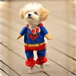 Roupinha para gato Super Homem Super Man Superman (Nova)
