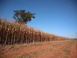 Fazenda para criação de gado e lavoura 196 hectares