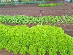 Verduras atacado 2,50