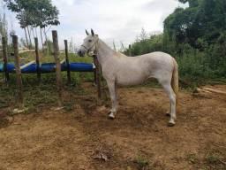 Égua MM Prenha