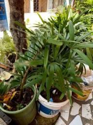 Título do anúncio: Mudas de plantas