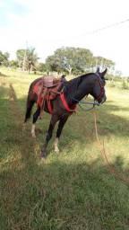 Vendo cavalo preto machador
