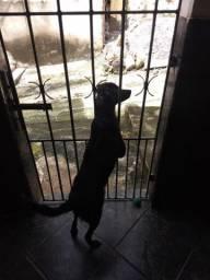 Cachorro para adoção!!!