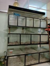 Título do anúncio: Bateria de aquario usada para pet shop