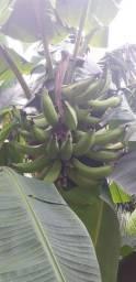 Banana grande.