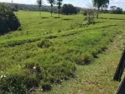 Fazenda com 350 alqueires na região nordeste do Estado do Pará