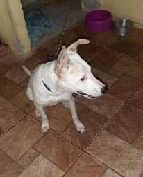 Doação de uma cadelinha, raça indefinida, 9 meses