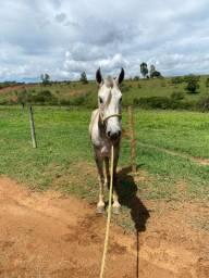 Vende se cavalo registrado