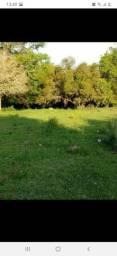 Procura-se  Terras de 1 a 2 hectares