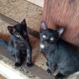 Doando estes gatos lindos. SÓ para quem cuida com carinho