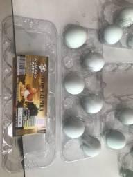 Ovos galados galinha azur 60 reias dúzia