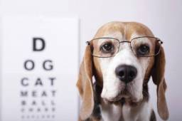 Vaga para oftalmologista veterinário