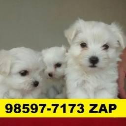 Canil Top Cães Filhotes BH Maltês Lhasa Basset Yorkshire Shihtzu Poodle Bulldog