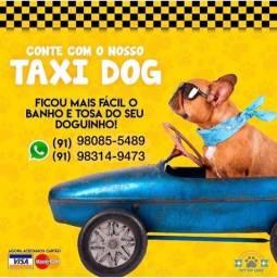 Banho e tosa táxi Dog delivery