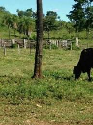 Fazenda Barrolândia Tocantins