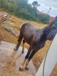 Vendo lindo cavalo panpa