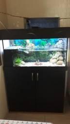 Aquario de tartaruga