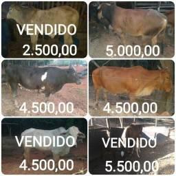 Animais à venda