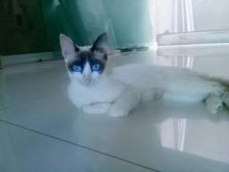 Doação de gata fema