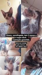 Adoção gatinha