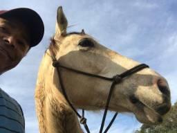 Cavalo Lindo Baio
