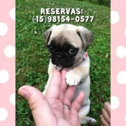 Título do anúncio: Pug baby Abricot - Últimos bebes disponíveis para reserva