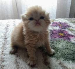 Bebê persa _ Parcelo