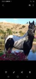 Garanhao Paint Horse