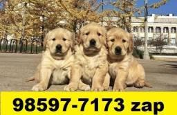 Canil Filhotes Cães Top BH Golden Boxer Rottweiler Akita Dálmata Labrador
