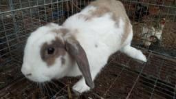 Vendo coelhos!