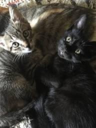 GRÁTIS Filhotes de gatos