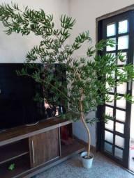 Bambu mosso lindo