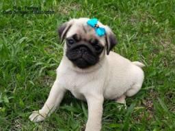 Lindos bebês de Pug