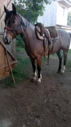 Vendo Cavalo Crioulo Puro com documento