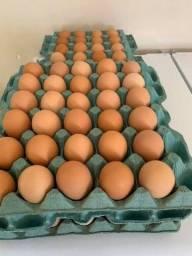 Vendo ovo caipira  e pernil caipira