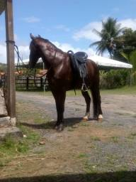 Cavalo de picado