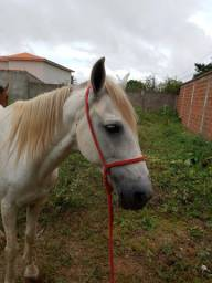 Cavalo muito manso