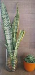 Vasos com vários tipos de plantas