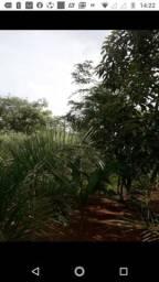Vendo chácara 5.000 m2 toda plantada