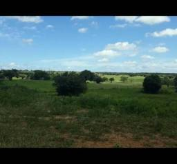 Fazenda com 290 hectares entre cajazeiras e sao pedro