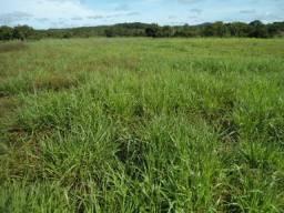 Fazenda com 840 hectares - Região do Maso